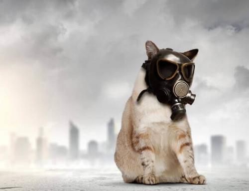 空污PM2.5來襲 如何維護肺部健康?